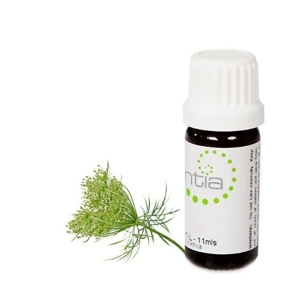 Escentia Carrot Oil (11ml)