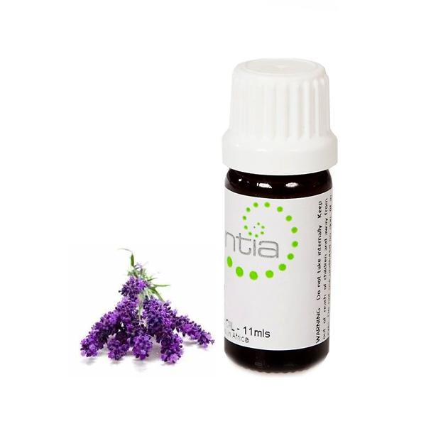 Escentia Lavender (11ml)